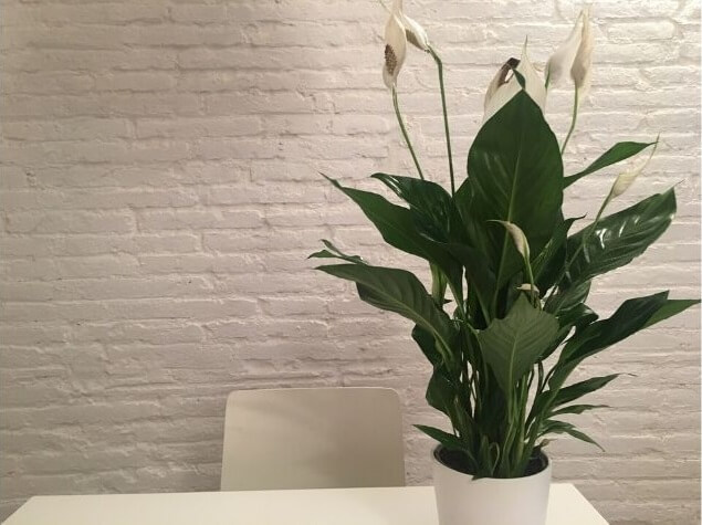 Luchtzuiverende planten tegen slapeloosheid